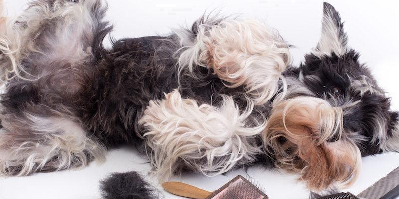 spring tis blowing season dog shedding sheds earthbath grooming coat
