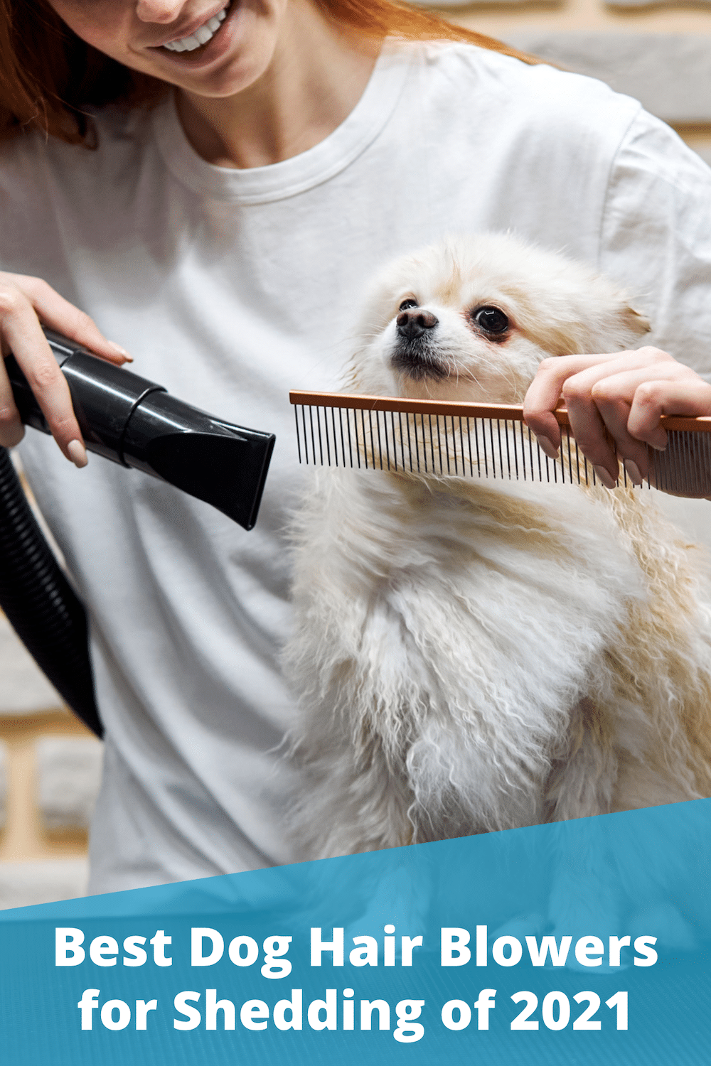 Top 5 Best Dog Hair Blowers for Shedding (2021 Reviews)