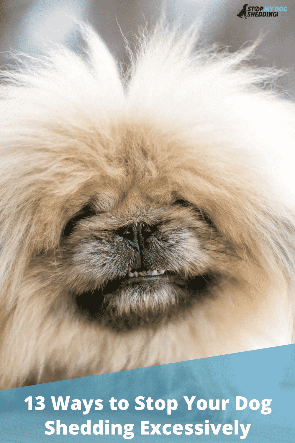 13 Ways To Stop Your Dog Shedding Excessively